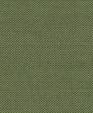Outdoorspectrumcilantro medium cropped
