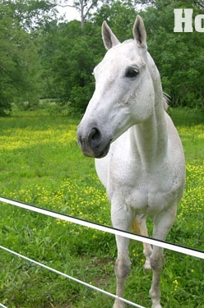 "Hot-Site HTP 1"" Electric Rail Horse Fencing on Designer Page"