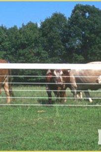 PolyPlus HTP Single Strand Horse Fencing on Designer Page