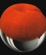 Peach medium cropped