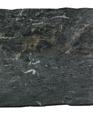 Blackcosmicvm medium cropped
