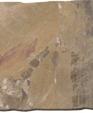 Moresco medium cropped