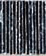Silvershadow medium cropped