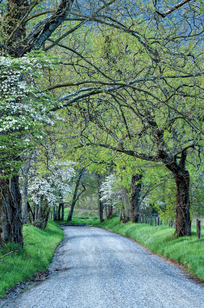 Country Road on Designer Page