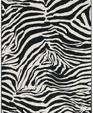 A zebra medium cropped