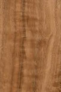 Prodin Eucalyptus on Designer Page