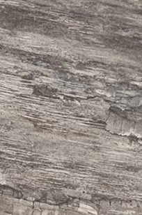 Sienna Petrified Bark - White Natural on Designer Page