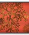 Gorgonia sample medium cropped