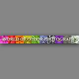Worldofcolorgallery